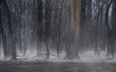 Αργεντινή: Πυρκαγιά κατέκαψε 65.000 στρέμματα δασικών εκτάσεων