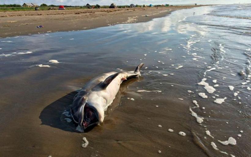 Δεκάδες νεκρά δελφίνια στις ακτές της Μοζαμβίκης - Μυστήριο η αιτία