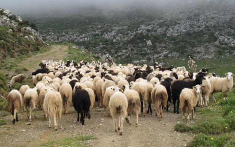 Μέτρα στήριξης ζητούν από την κυβέρνηση οι κτηνοτρόφοι