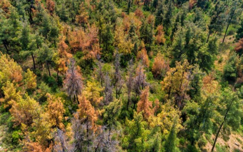 Τη δική του πανδημία αντιμετωπίζει το δάσος του Σέιχ Σου – «Δεν είναι τυχαίο αυτό που συμβαίνει»